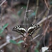 Ote Falls butterfly