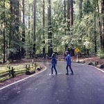 Abbey Road in the California redwoods thumbnail