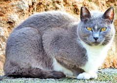 Eyes cat (ioriogiovanni10) Tags: coolpix febbraio balduina click photographer roma animali fotografia felino animal gatto occhi sguardo nikon cat