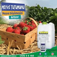 profert çilek (Profert Gübre) Tags: çilek cheryy fertilizer profert doğalafet damlama yandal sebze seracılık sebzecilik sera seed season