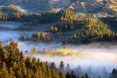 Narnia (rootswalker) Tags: northerncalifornia magical fog rollinghiils redwoods layers mountains narnia morninglight oaktrees valley landscape