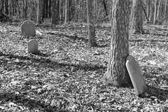 Beaver Creek Cemetery 15 (Joseph C. Hinson Photography) Tags: beavercreek cemetery cematry kershawsouthcarolina beavercreekcemetery abadoned losttowilderness mothernaturewins rural abandoned ruralabandonement beavercreekbaptistchurch baptistchurch churchcemetery ruraljungle isolatedmoldgraves oldcemetery disusedcemetery