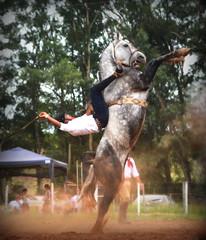 Vitor Ferreira e Despacho (Eduardo Amorim) Tags: gaúcho gaúchos gaucho gauchos cavalos caballos horses chevaux cavalli pferde caballo horse cheval cavallo pferd pampa campanha fronteira quaraí riograndedosul brésil brasil sudamérica südamerika suramérica américadosul southamerica amériquedusud americameridionale américadelsur americadelsud cavalo 馬 حصان 马 лошадь ঘোড়া 말 סוס ม้า häst hest hevonen άλογο brazil eduardoamorim gineteada jineteada