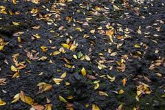 Autumn leaf? (Andy @ Pang Ket Vui ( shootx2 )) Tags: autumn leaf yellow green rocks hill semporna fujifilm x100f