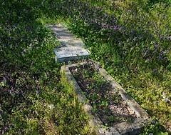 (claudine6677) Tags: friedhof graveyard verfallen decay gravestone tombstone old alt