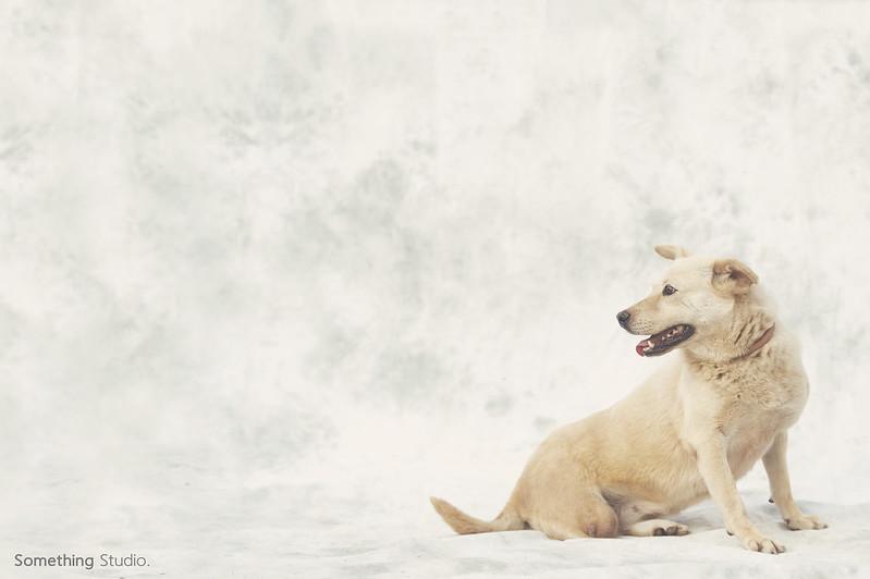 寵物攝影/待領養-補獸夾系列