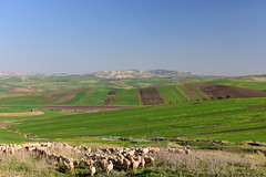 Rif, Morocco, January 2019 D810 291 (tango-) Tags: marocco morocco maroc 摩洛哥 marruecos марокко المغرب