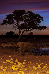 _RJS3113 (rjsnyc2) Tags: 2019 africa d850 namibia night nikon outdoors photography remoteyear richardsilver richardsilverphoto safari sunset travel travelphotographer animal camping nature stars tent wildlife