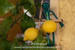 JRCamargue.jpg (JRCamargue) Tags: leicasl citron grenouille provence camargue