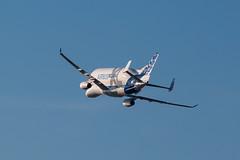 Airbus BelugaXL F-WBXL (SimonFewkes) Tags: avgeek aircraft aviation aircraftphotography aeroplanes aviationphotography airport aircraftphotos aircraftspotter aeroplane spotting spottinglog planes plane planespotting