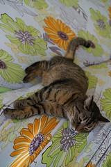 DSC01012 (iocatco) Tags: cat kitten cats sony a7