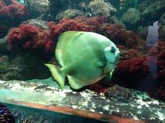 rhenen_2_043 (OurTravelPics.com) Tags: rhenen fish coral aquarium ouwehands dierenpark zoo