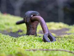 Rust on Green (Howie Mudge LRPS BPE1*) Tags: metal bolt hook loop ring abstract moss rust green panasonicg9 m43 microfourthirds leicadg1260f2840 panasonicdcg9
