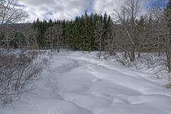 La rivière attend le printemps avec impatience (GEMLAFOTO) Tags: sentierdelasucrerie neige rivière hiver winter river oldshealsea gatineaupark parcdelagatineau sugarbushtrail chelsea