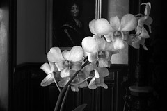 Orchids in a Parlor (kinglear55) Tags: flower orchid monochrome blackandwhite panasonic lx7 adobe elements art photography