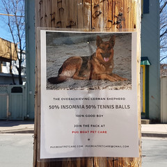 The Overachieving German Shepherd (Coastal Elite) Tags: overachieving german shepherd halifax novascotia insomnia tennisballs goodboy petcare funny witty amusing clever cute creative sign affiche enseigne signs advertising community tennisball germanshepherd photo dog dogs pets animal business posted poll