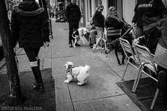 High Alert (Filter Free Photography) Tags: 2019 23mm bw bwstreet filterfreephotography frederick fuji fujifilm fujilove fujinon lightroom maryland winter x100f candid frednet people pets street streetphotography urban xseries unitedstatesofamerica us