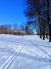 ski tracks (ekelly80) Tags: dc washingtondc january2019 winter snurlough snow snowstorm shutdown trumpshutdown snowday snowywalk white snowy nationalmall ski tracks snowcovered