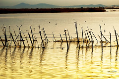Daurat (rossendgricasas) Tags: albufera valència water gold nikon photography photo photographer photoshop travel