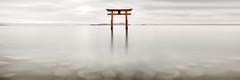 Torii gate of Shirahige Shrine in Lake Biwa (Ray Jennings AU) Tags: torrigate panorama nikond850 japan lakebiwa rayjennings nikon2470e