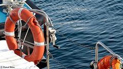 Lifebuoy (patrick_milan) Tags: brest buoy buoyant red blue lifebuoy sea ship boat