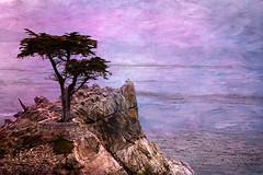 Lone Cyprus (John Pingree) Tags: nikond70
