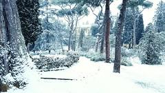 path leading to the Abbazia di San Miniato al Monte (Go Ciop Go) Tags: firenze florence toscana tuscany italia italy neve snow nevicata snowfall inverno winter 2018 paesaggioinnevato snowylandscape alberi trees