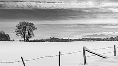 Bavarian winter (hjuengst) Tags: bavaria bayern tree baum alps alpen wolken clouds overcast wolkig schwarzweis blackandwhite fence zaun winter winterbeauty january januar absoluteblackandwhite