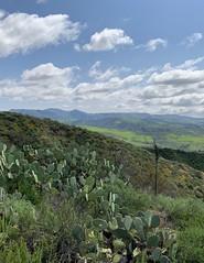 Ronald W. Caspers Wilderness Park, San Juan Capistrano (p.bjork) Tags: ronaldwcasperswildernesspark caspers cotodecaza orangecounty california cactus green hills fields sanjuancapistrano
