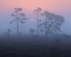 Store Mosse Nationalpark Höst VII (Gustaf_E) Tags: forest höst landscape landskap morgon nationalpark pine skog småland storemosse storemossenationalpark sverige sweden tall woods
