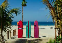 Miami beach? No. Dubai! (Bokeh & Travel) Tags: lamer beach dubai sand palm trees sea seascape surf boards colourful colorful colour color seaside view sandy uae united arab emirates blue sky