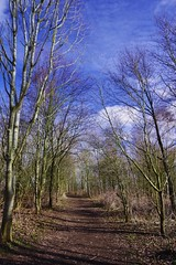 Wintry path (Sundornvic) Tags: trees path way woods nature walk sky blue clouds winter cold branches light