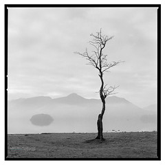 Derwent_Water_HP5-2 (D_M_J) Tags: derwent water lake district lakedistrict lakeland cumbria keswick mist morning landscape film camera medium format 6x6 square 120 roll hasselblad 500cm 500 cm 80mm ilford hp5 plus 400 kodak hc110 epson v850 vuescan black white bw blackandwhite mono monochrome