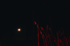 Moon | Red (tyle_r) Tags: hobart wisconsin 2019 vscofilm march