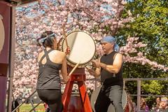 CherryBlossomDC2019-673.jpg (carlton.colter) Tags: kizuna cherryblossomdc taiko taikotakeover sakurataikofest washington dc usa