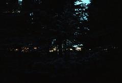 #treesun (dalailimba department of imagination) Tags: tree sunset sunrise kodak brandenburg uckermark templin analog analogfilm analogphoto analogphotography dalailimba kodakportra160 germany portra portra160 streetphotography trees sunsrise staybrokeshootfilm walden forest eastgermany filmcommunity shootfilm film 35mm 35mmfilm kleinbild