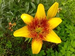 (Сергей88) Tags: цветы цветок макро макросъёмка природа