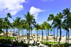 OAHU-HAWAII_1A54205-01 (Donna Molinari Photography) Tags: sanjose ca usa