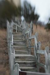 Steps (timvandenhoek1) Tags: lensbabycomposerproii lensbabysweet50optic f28 sonyilce6000 hahatonkastatepark watertower steps missouri midwest hiking trekking path walkway timvandenhoek tiltshift