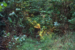sunlit path (Theolde) Tags: leicamp film provia