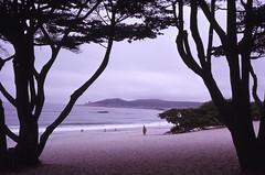 Baie de Carmel (Archives/UdeM) Tags: baiedecarmel carmelbythesea californie california robertgarry étatsunis plage beach unitedstates