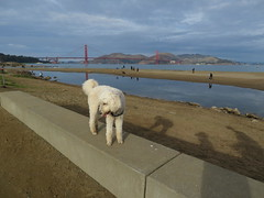 This sort of wall works great! (Talley1144) Tags: posey dog crissyfield ggnra ggb sanfrancisco sfbay shadows reflections