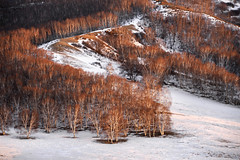 Trees (MelindaChan ^..^) Tags: innermongolia china 内蒙古 snow white 雪 tree plant nature chanmelmel mel melinda melindachan 冰 bashang 壩上