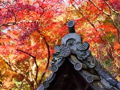 京都山科毘沙門堂 (Eiki Wang) Tags: 京都 kyoto 山科 毘沙門堂 yamashina