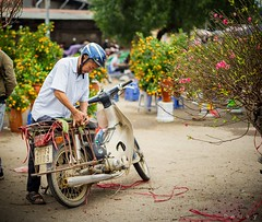 Tết (phamducduy2001) Tags: a7m2 sonya7ii streetphotography street lunarnewyear photographer photography southeastasia asian asia vietnamese vietnam tet hanoi