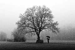 Protect yourself big tree (Fan.D & Dav.C Photgraphy) Tags: copse dawn tree bare fence sunrise sky single lane road fog grass child umbrella winter snow cold falls emotion black white countryside flakes