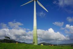 Ravenshoe_20190216_0032 (O En) Tags: wind turbines ravenshoe cows