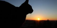 Moka (Guillaume Auberget) Tags: moka chat cat félin animaux animauxdecompagnie aube levédusoleil soleil matin