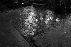 thaw (ababhastopographer) Tags: 雪どけ shadowtones acros kyoto kuramayama kuramadera thaw afternoon reflection winter treetop mud maōden 京都 鞍馬山 鞍馬寺 魔王殿 冬 午後 反射 梢 泥濘