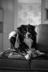 Rian 🐾 (unbunt.me) Tags: blackwhite australianshepherd aussie hund dog